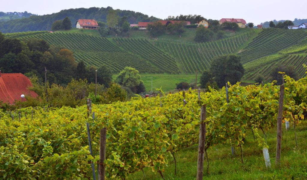 winnica joannes