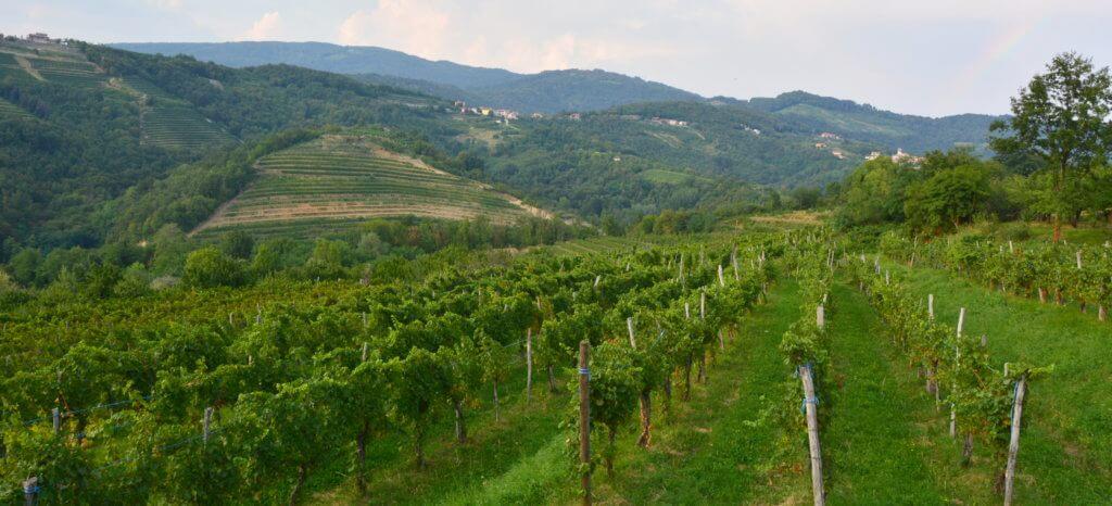 Winnice w Słowenii